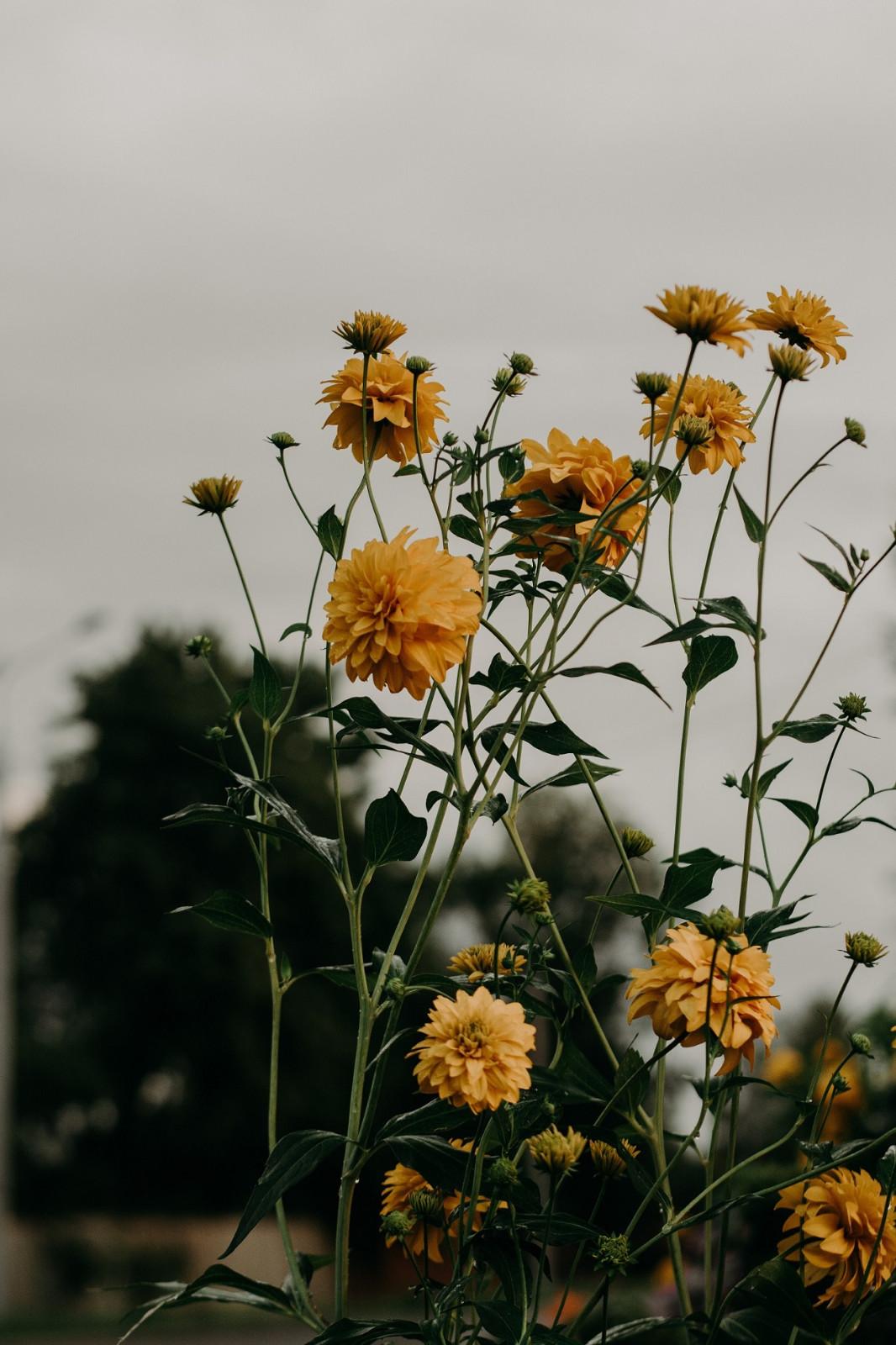 鲜花的图片壁纸唯美小清新,适合当聊天背景