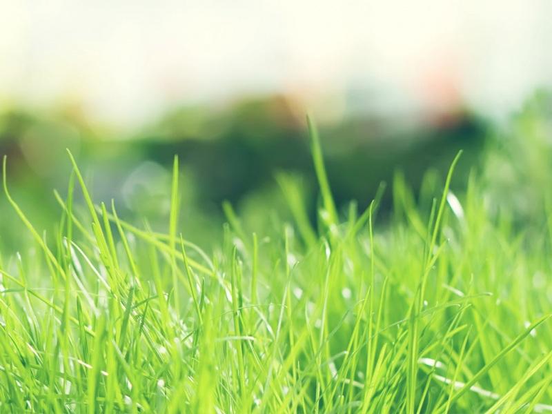 唯美绿色风景养眼桌面壁纸图片
