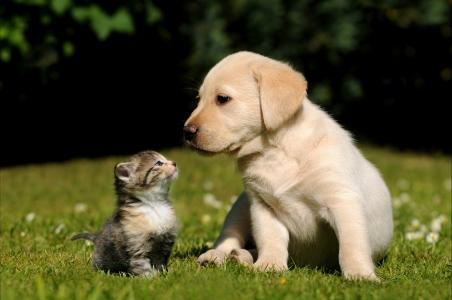 不同品种的可爱小狗狗图片大全