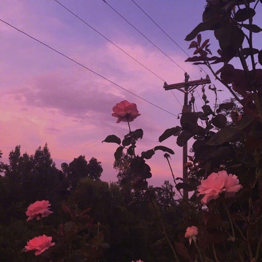 好看的风景图片 傍晚的粉紫色晚霞像画一样