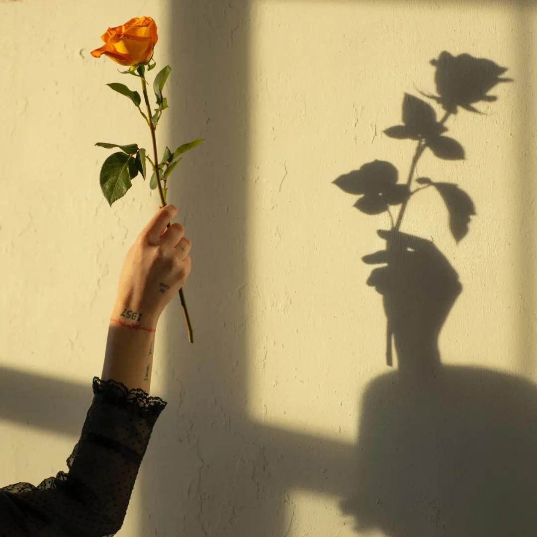好看背景图片精选 好看有意境的优质花朵