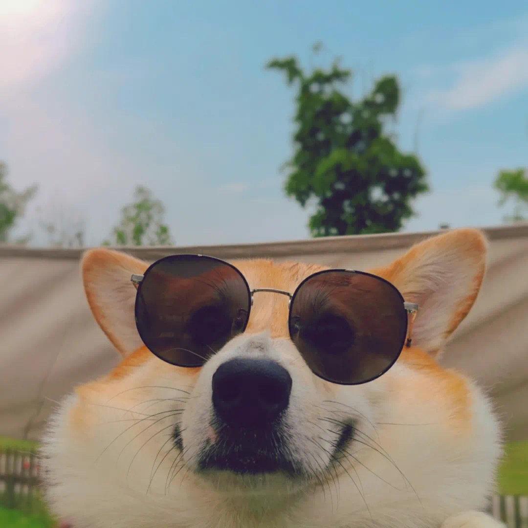 第一眼就吸引人的动物头像图片,搞笑又可爱