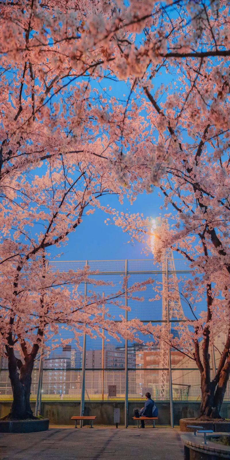 好看的壁纸图片|唯美好看的粉色花卉
