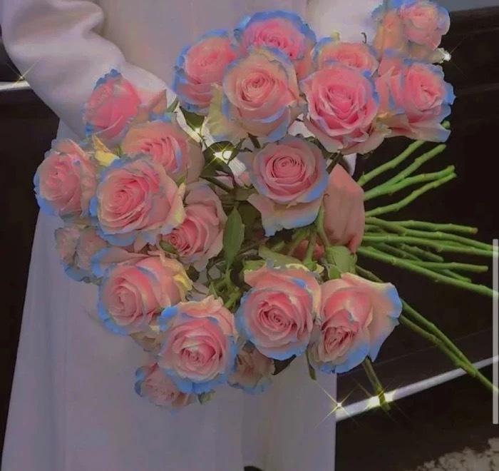 花的图片唯美头像|粉玫瑰的花语是表白