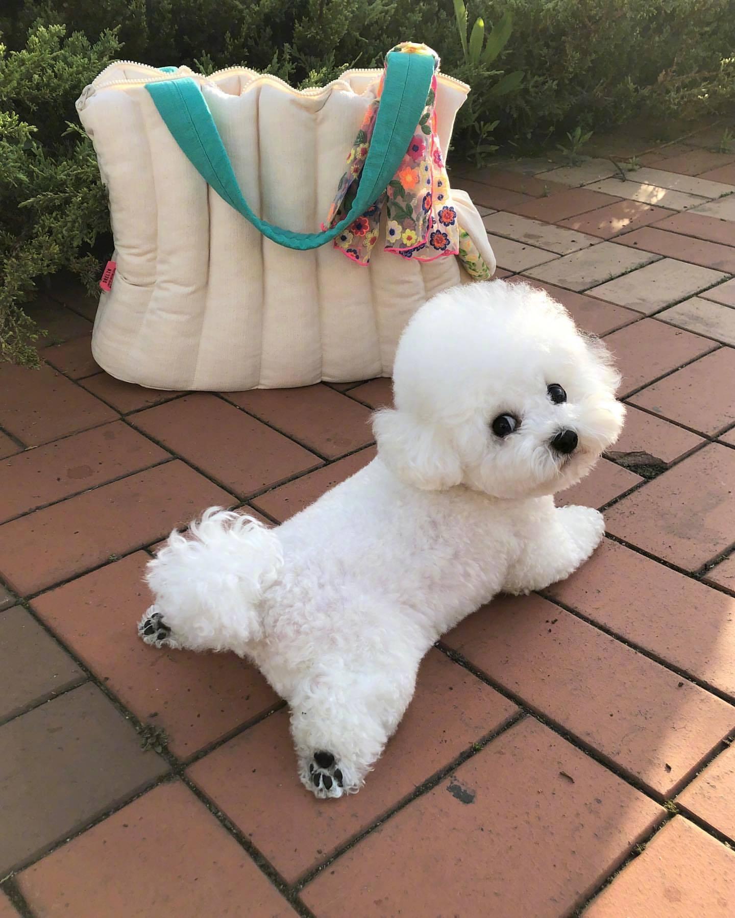 白色宠物小狗精致日常头像图片|修勾你怎么这么