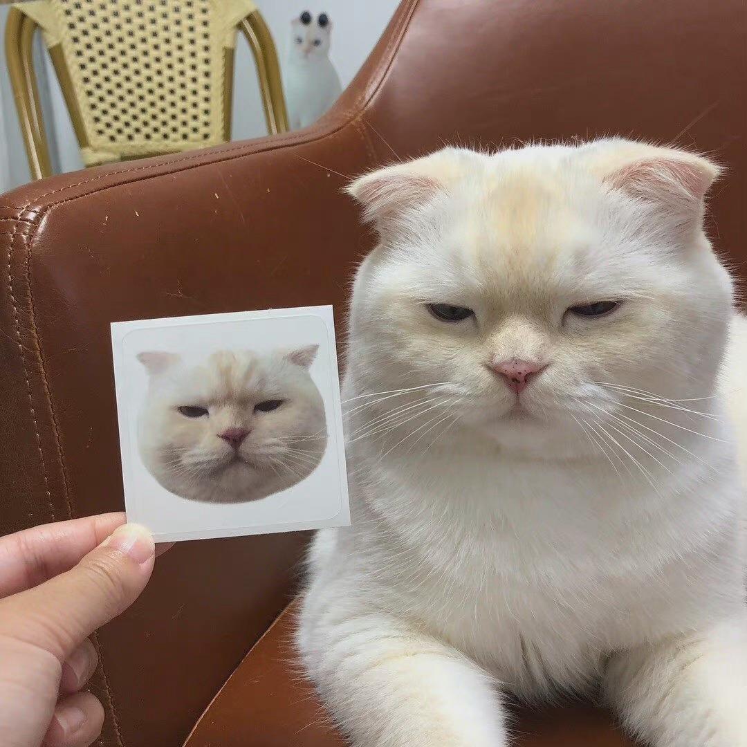 爆笑2021的沙雕猫咪头像图片大全