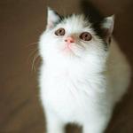 超可爱的小猫咪图片