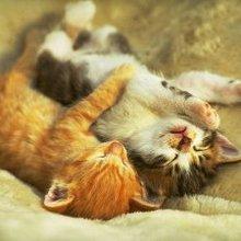 二只可爱的小猫咪睡着了