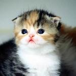 超级可爱的小猫咪