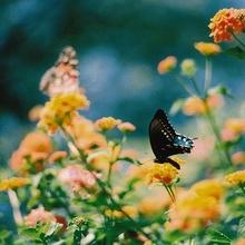 可爱的花儿LOMO图片三
