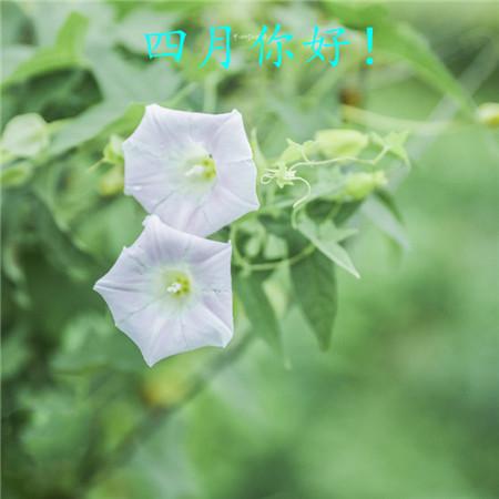 四月你好的花开唯美植物风