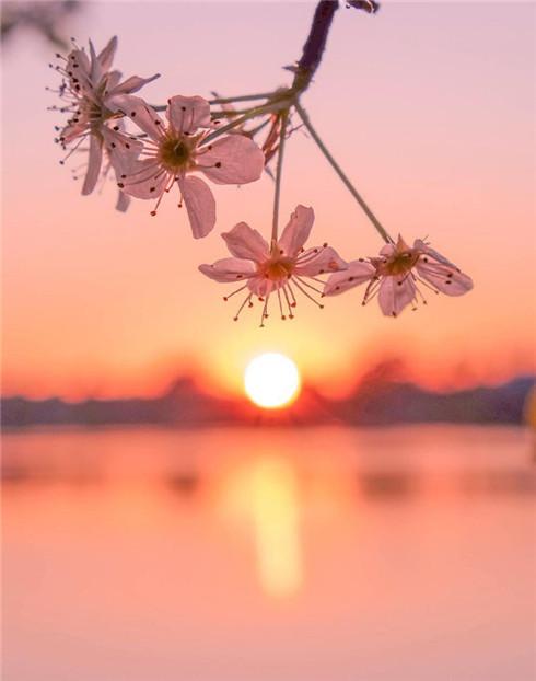 唯美的湖边日落黄昏壁纸图片