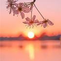 唯美的湖边日落黄