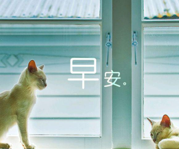 早安动物们温暖心语图片
