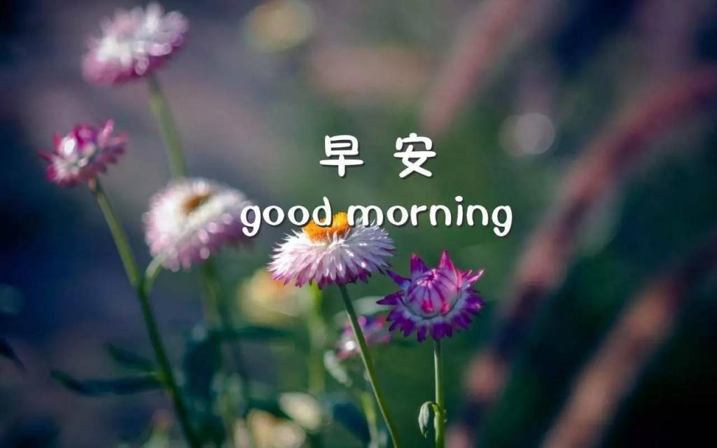 good morning早安唯美植物高清图片
