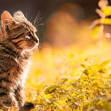 唯美超萌小奶猫图片桌面壁