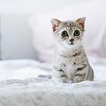 唯美可爱萌宠猫咪高清图