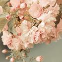 盛开中的唯美花朵