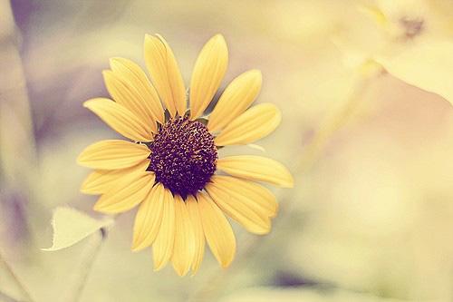 好看守护着你就像向日葵守护太阳一样执着图片