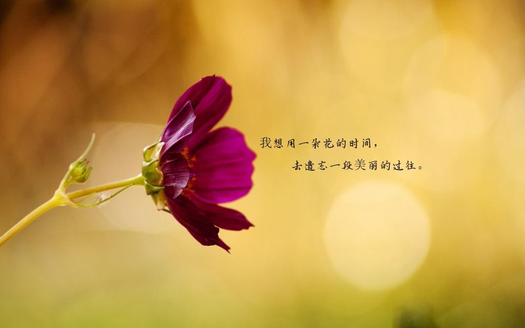 花开唯美伤感句子桌面壁纸图片_有些记忆注定无
