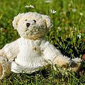 好看可爱的玩具熊
