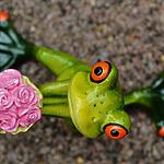 好看玩具青蛙高清图片大