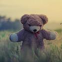 好看可爱的泰迪熊