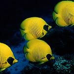 漂亮的海底世界图片大全