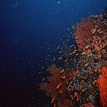 好看海底生物图片大全