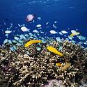 漂亮的深海鱼群图
