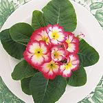 超美用花卉丝带装饰盘子