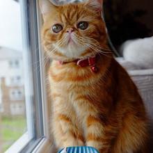 超美猫的眼神总是能杀死人