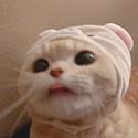 江孑 猫咪可爱超萌