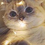 [图]早安,可爱的小猫咪图