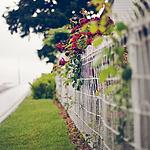 唯美艺术围栏风景图片大