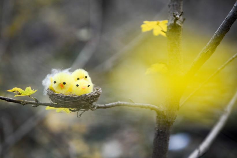 挂在树上的可爱小鸟巢高清桌面壁纸图片