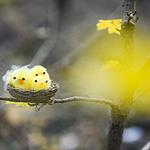 唯美可爱的玩具小鸟巢图