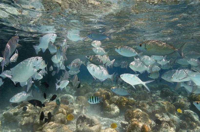 潜水看海底世界高清图片大全