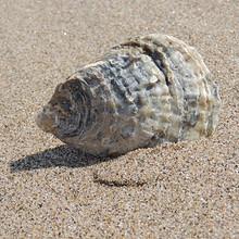 沙滩上唯美好看的贝壳高清壁纸图片