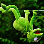 科密特青蛙和粉红豹布偶