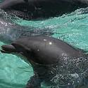 漂亮的水中的海豚