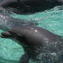 漂亮的水中的海豚图片大全