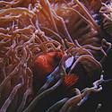 好看海底珊瑚图片