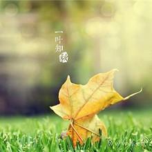 一叶知秋好看唯美的立秋壁