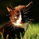 超美艺术猫咪图片大全