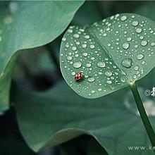 美丽谷雨节气带着 最新谷雨