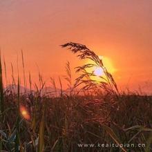 唯美夕阳真实风景落日余晖