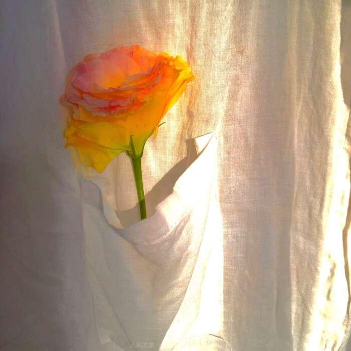 向晚/ins橙色系唯美意境背景头像图片