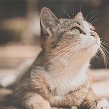 猫咪可爱高清桌面壁纸图片大全