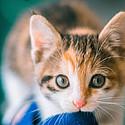 呆萌的可爱猫咪高